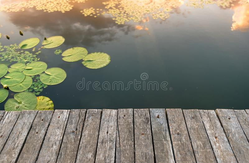 Peaceful place at the pond royalty free stock photography