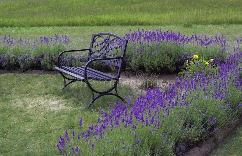 A Peaceful Place To Sit. Taking time out in nature is always a wonderful thing to do, and were better to go than a lavender field. Not only is it filled with stock photography