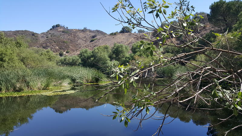 Peaceful pond stock photography