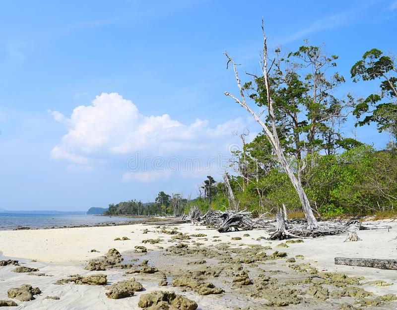 Peaceful Rocky Elephant Beach with Trees and Blue Sky, Havelock Island, Andaman Nicobar, India - Natural Background royalty free stock photo