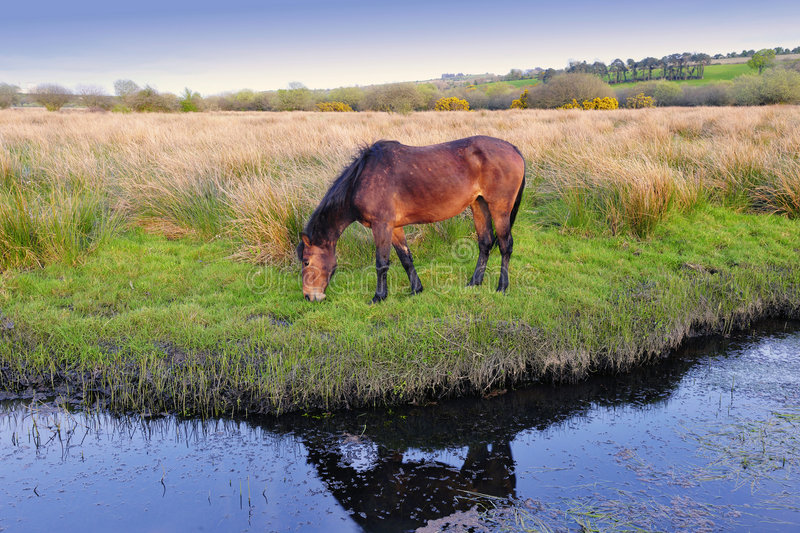 Download Peaceful Scene stock photo. Image of horse, ireland, tranquil - 9101108
