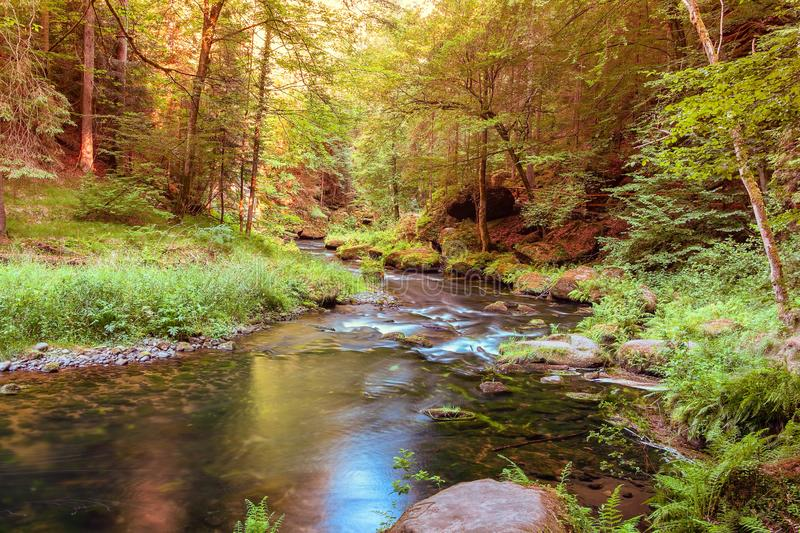 Peaceful scene of a small river or a brook royalty free stock image