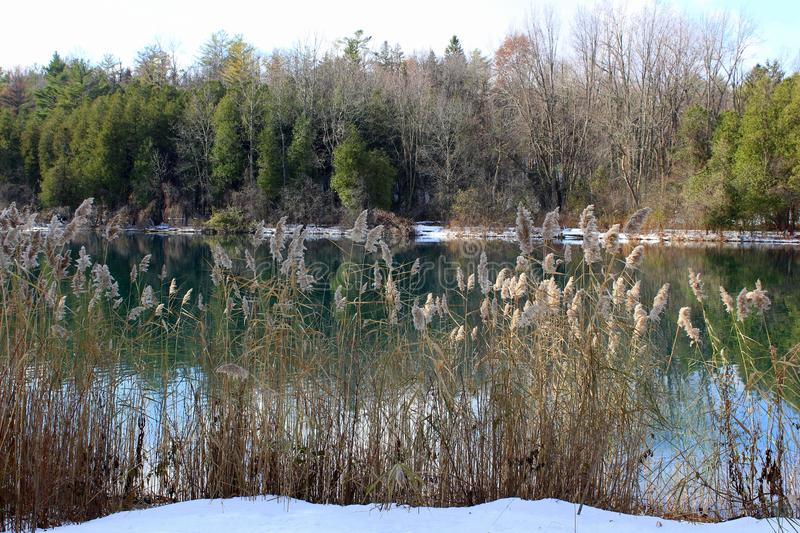 Scene of clear blue-green lake water with trees, ornamental grass, and freshly fallen snow along banks royalty free stock images