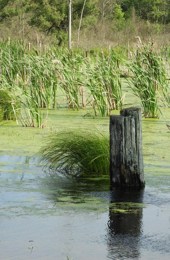 Peaceful scene of swamp grass clump and log stock image