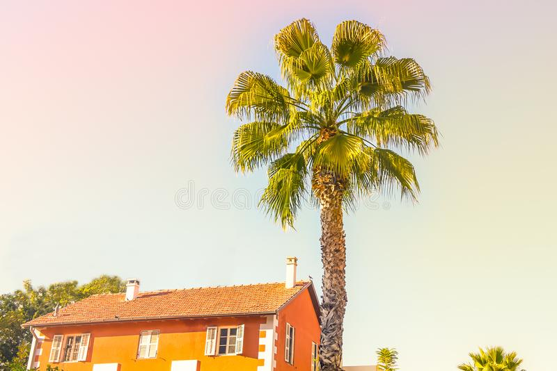 Peaceful scenery of palm tree and bright orange color house shingles roof against the sky. Tropical background palm trees sun ligh royalty free stock image
