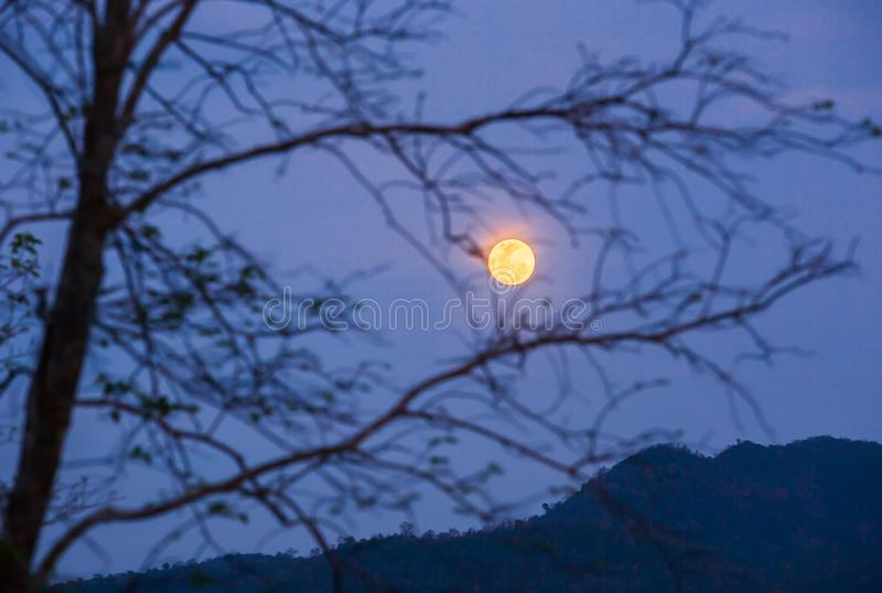 Peaceful scenery of wilderness at night. Night sky with full moon behind blurred bare branches of tree, blue mountains backgrounds royalty free stock photos