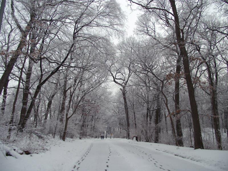 Peaceful snowy path stock photos