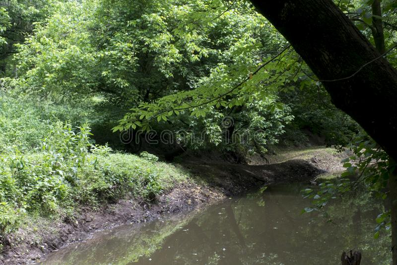 Peaceful stream in the forest royalty free stock photo
