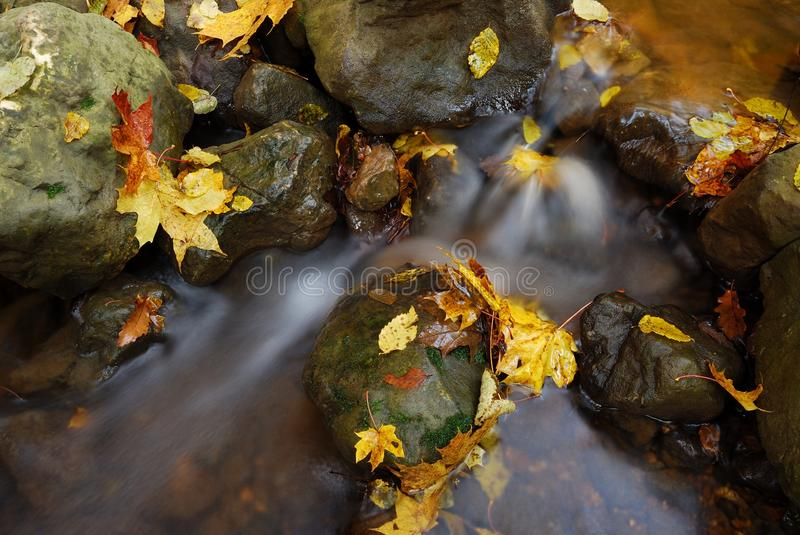 Peaceful Stream in the golden autumn with fallen leaves. Details of a peaceful stream running the forest with the yellow fallen leaves on the water stock photos