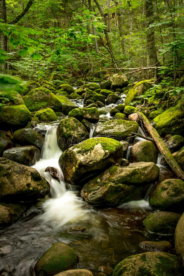 A peaceful stream in a quite forest stock photos