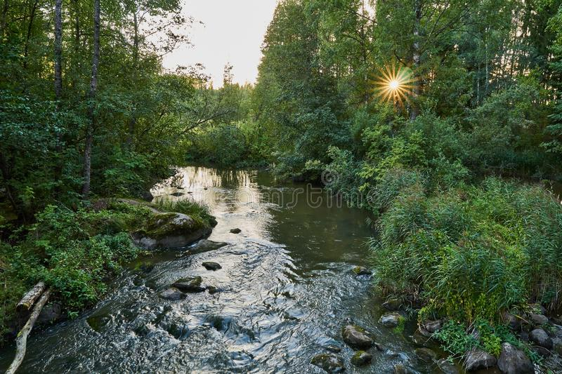 Peaceful summer night. River flowing in peaceful summer night. Sun shining through foliage royalty free stock photo