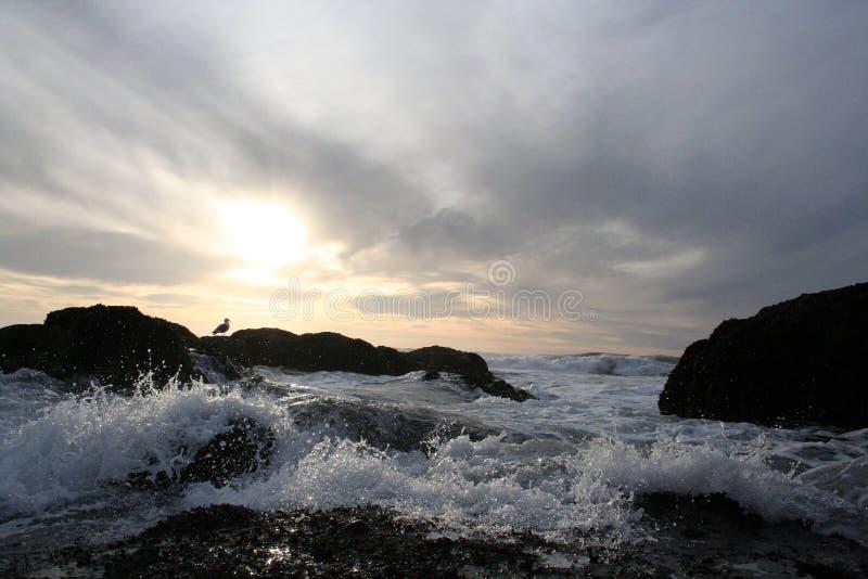 Bird on rocks in rough ocean waves royalty free stock photos
