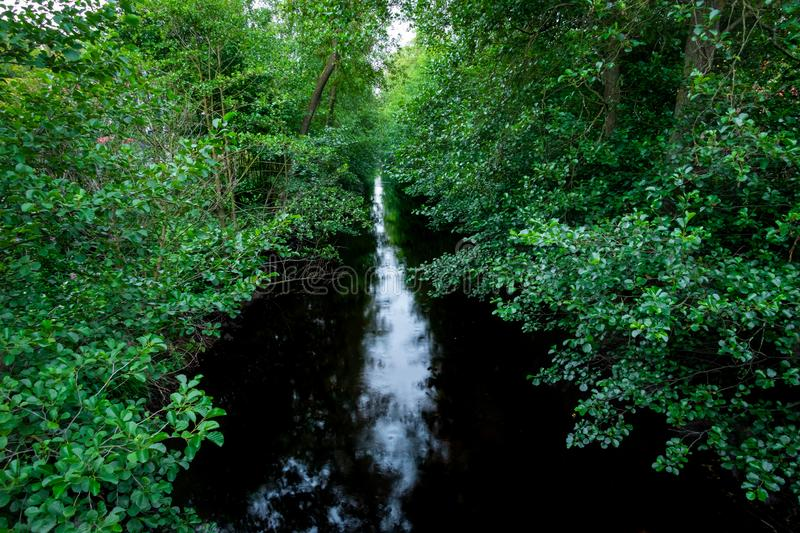 Peaceful and tranquil stream with dark water in a forest glade and surrounding green leaf trees. Horizontal composition royalty free stock photography