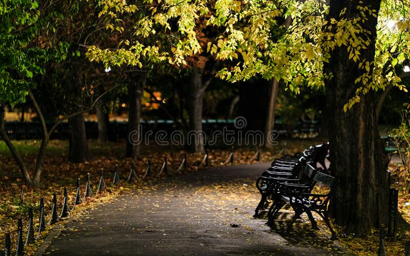 Peaceful walk in the park during the night. Night peaceful scene in a park with a row of benches and an empty path with autumn leaves on the ground royalty free stock photography