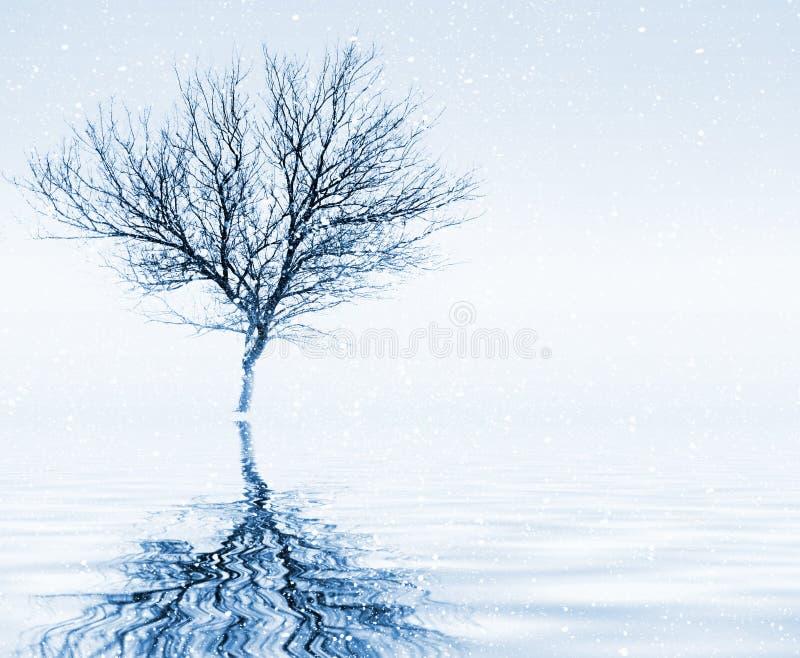 Peaceful winter scenery stock photo