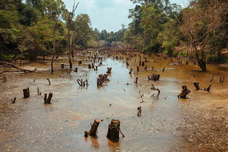 Lake with old trees sticking out of the water in Cambodia near ancient Angkor Wat Temple Ruin Complex stock photos