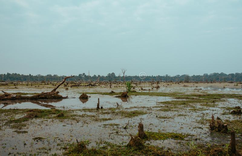 Lake with old trees sticking out of the water in Cambodia near ancient Angkor Wat Temple Ruin Complex stock photography