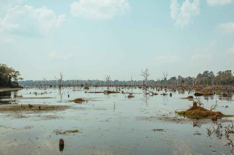 Lake with old trees sticking out of the water in Cambodia near ancient Angkor Wat Temple Ruin Complex royalty free stock image