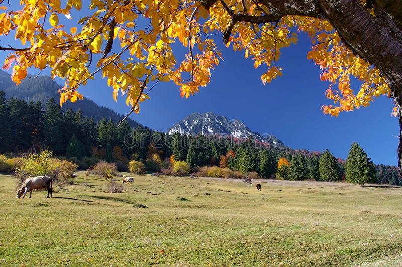 Autumn landscape with beautiful peaceful place. For grazing (Zarnesti - Brasov - Romania) stock photography