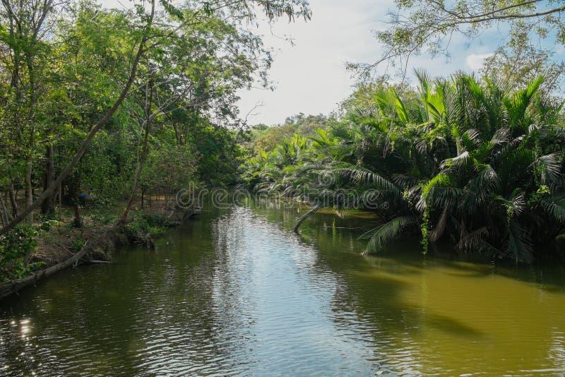 Creek flowing through lush Nipa palm grove in Bang Krachao, Thailand. royalty free stock photo