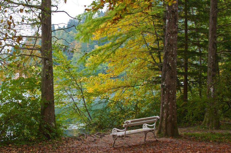 Peacefulness wśród jesieni ulistnienia obraz stock