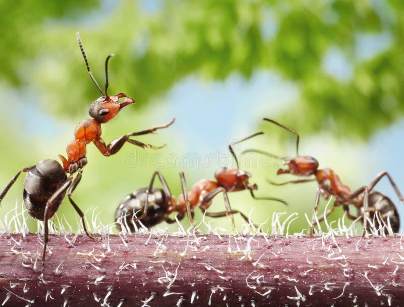 Peacemaker, mierenverhalen royalty-vrije stock afbeeldingen