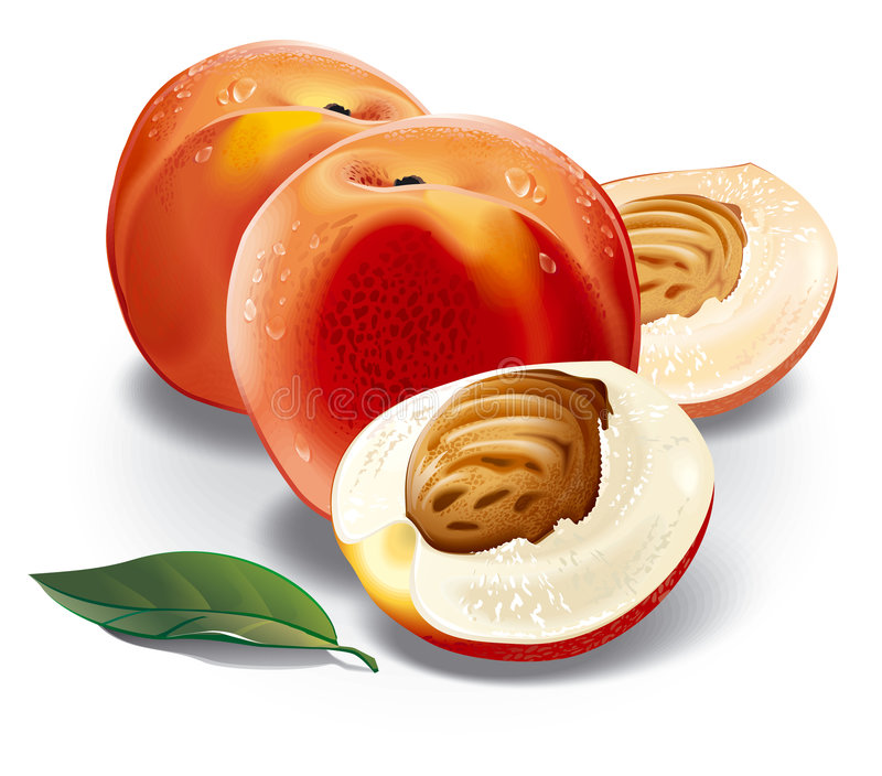 Peach. Hand vector image. Detailed image. In vector originals, each object can be independent