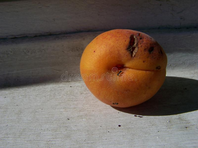Peach and ants stock photo