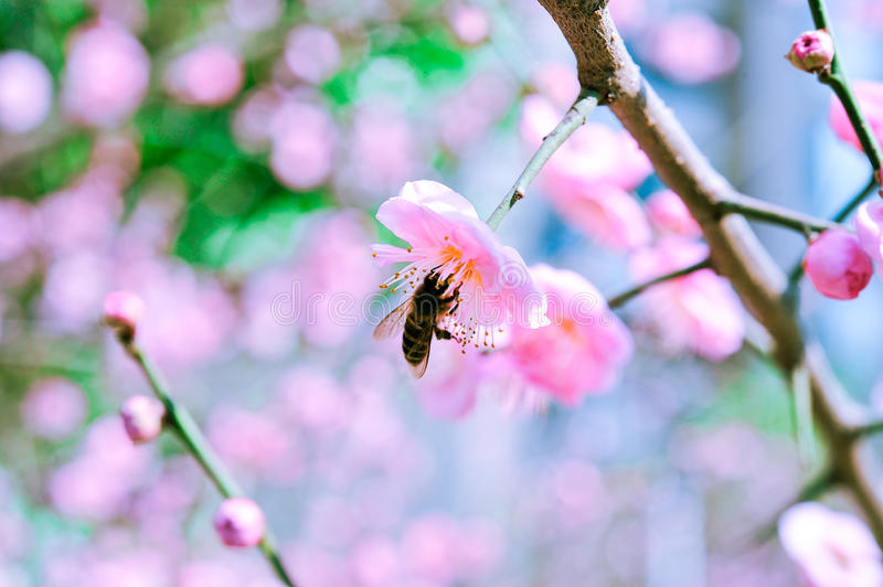 Peach and bees stock photography