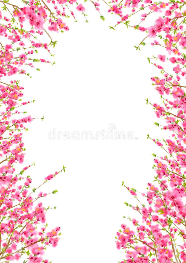 Peach Or Cherry Blossom Background In Spring Time Stock Photography