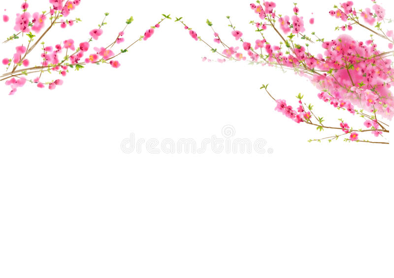 Peach or Cherry blossom in spring time royalty free illustration