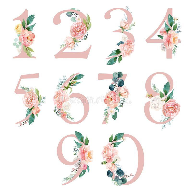 Free Peach Cream / Blush Floral Number Set - Digits 1, 2, 3, 4, 5, 6, 7, 8, 9, 0 With Flowers Bouquet Composition Royalty Free Stock Image - 166151476