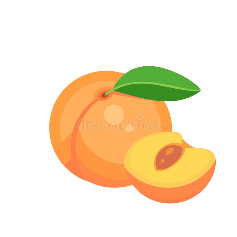 Free Peach Fruit Isolated On White Background. Vector Illustration Stock Image - 153265621