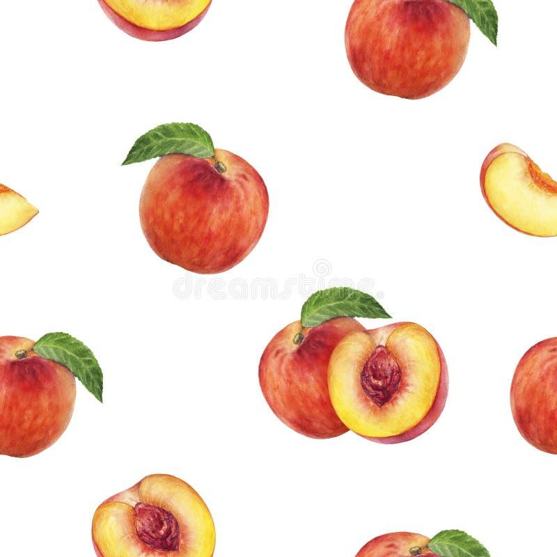 Peach hand drawn watercolor illustration. Seamless pattern. Peach watercolor pattern. Hand drawn watercolor illustration royalty free illustration
