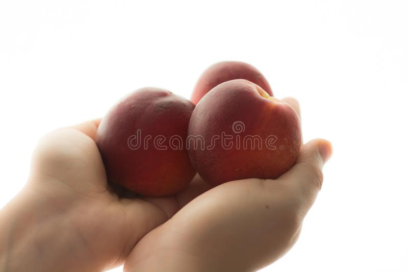 Peach in hand stock image