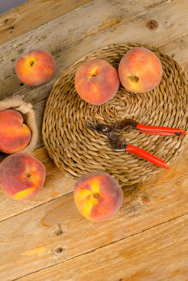 Peach harvest stock photography