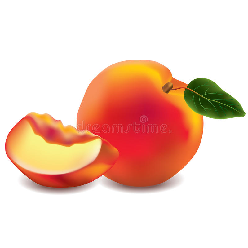 Peach isolated on white photo-realistic. Vector illustration royalty free illustration