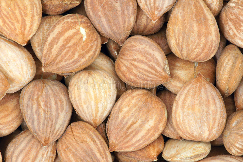 Download Peach nutlets stock image. Image of food, kernel, nutlet - 28783585