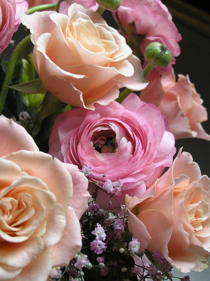 Free Peach & Pink Royalty Free Stock Photos - 152848