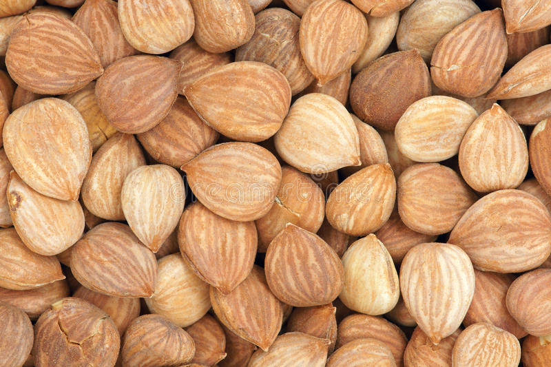 Download Peach seed stock photo. Image of edible, background, dried - 29683418