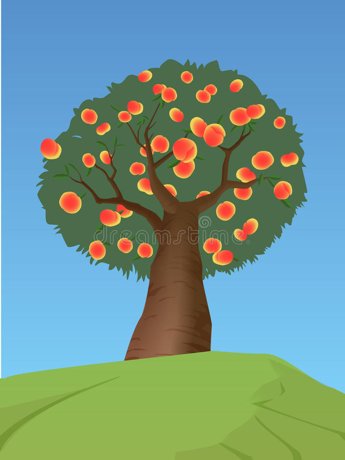 Download Peach Tree Royalty Free Stock Image - Image: 19318746