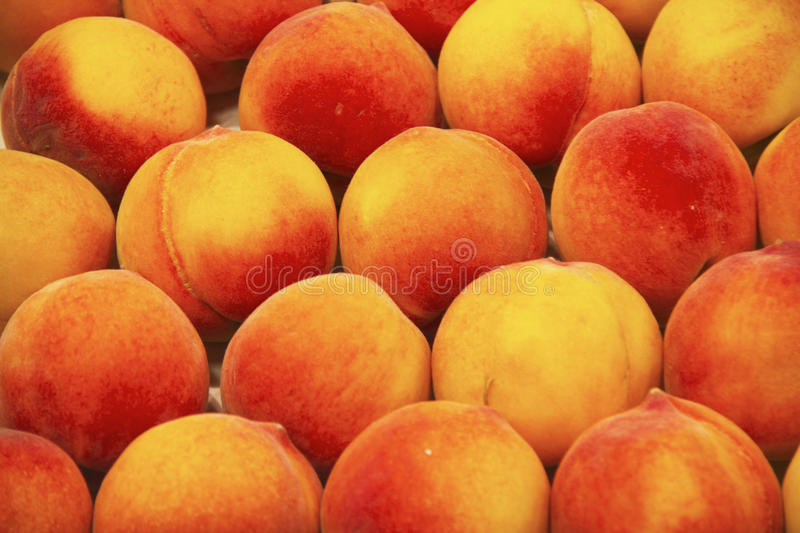 Download Peaches stock photo. Image of agricultural, roundish - 15265748
