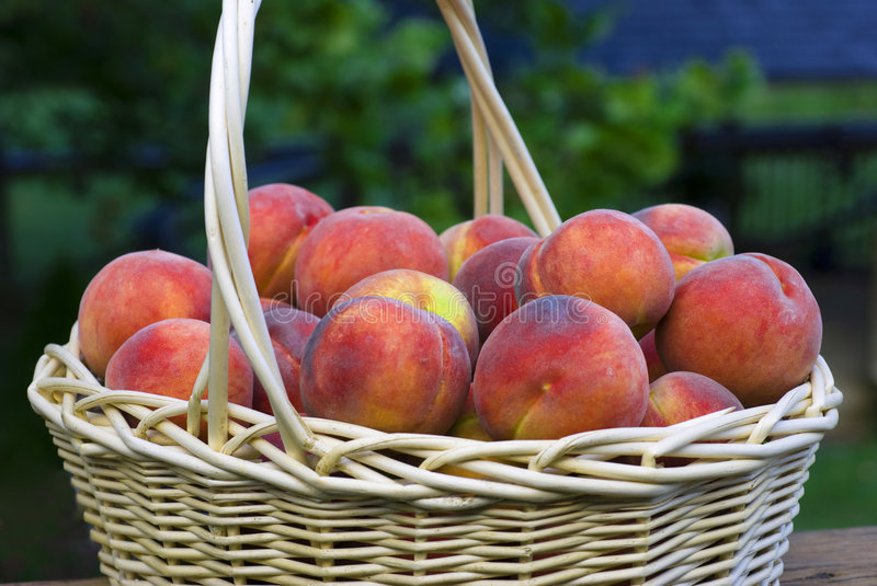 Peaches in a Basket. Closeup of fresh peaches in a wicker basket royalty free stock photo
