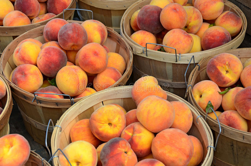 Peaches in bushel baskets. Ripe peaches in wooden bushel baskets at the market royalty free stock images