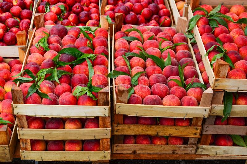 Peaches in crates. Fresh, ripe peaches in wooden crates on wholesale market stock photos