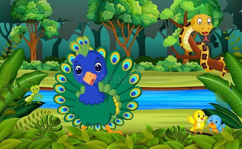 peacock στο δάσος απεικόνιση αποθεμάτων
