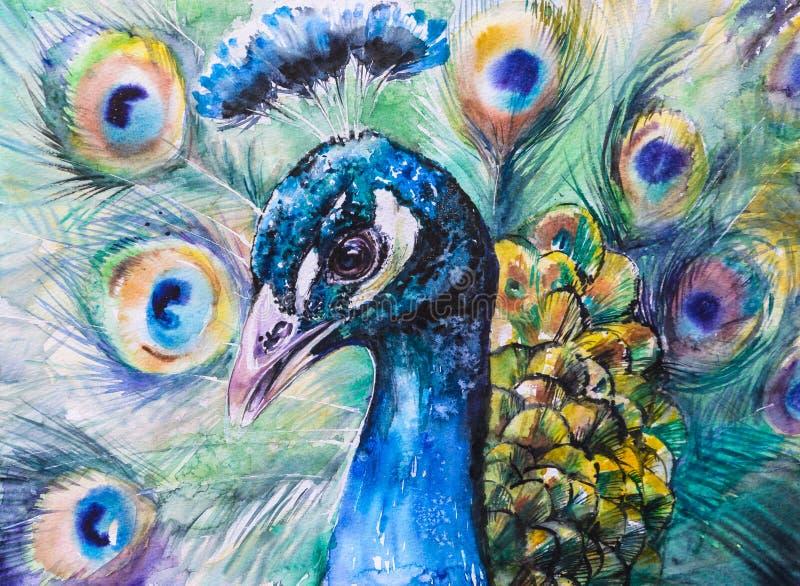 peacock ilustração royalty free