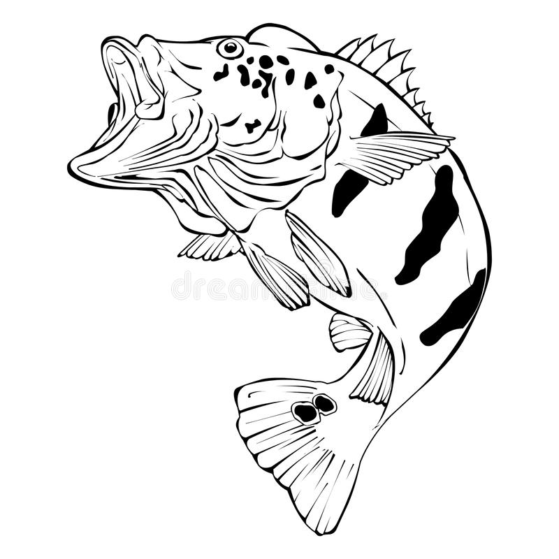 Peacock Bass Vector Illustration royalty free stock images