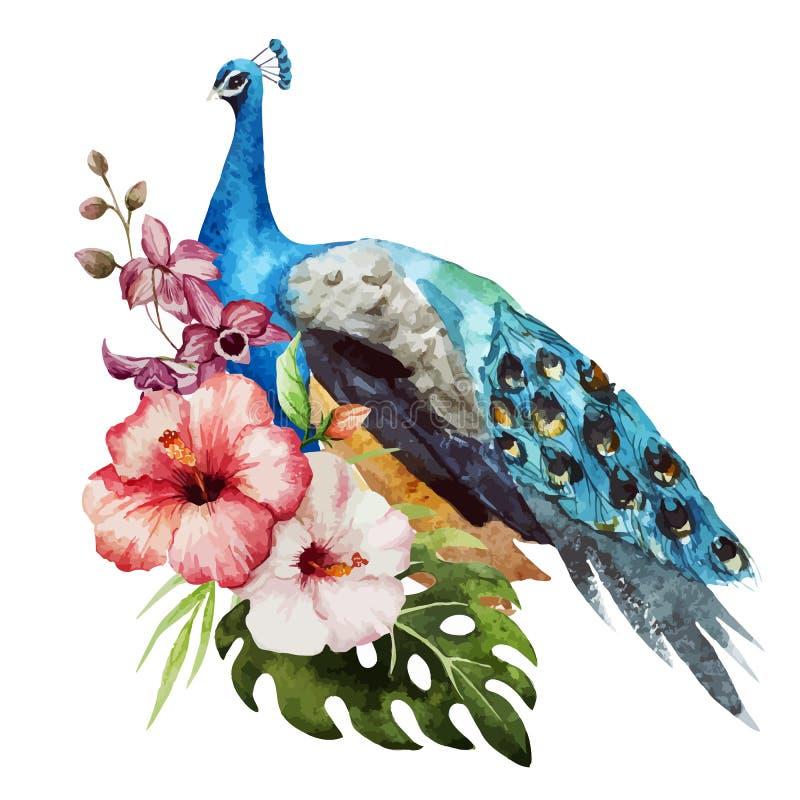 Peacock royalty free illustration