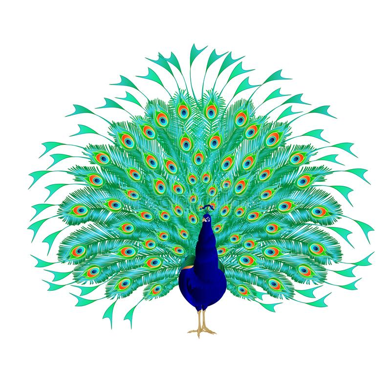 Free Peacock Beauty Tropical Bird On A White Background Watercolor Vintage Vector Illustration Editable Royalty Free Stock Photo - 144216075